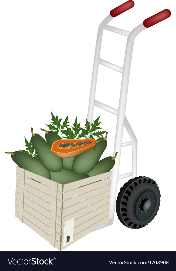 A hand truck loading papayas in shipping box vector | Price: 1 Credit (USD $1)