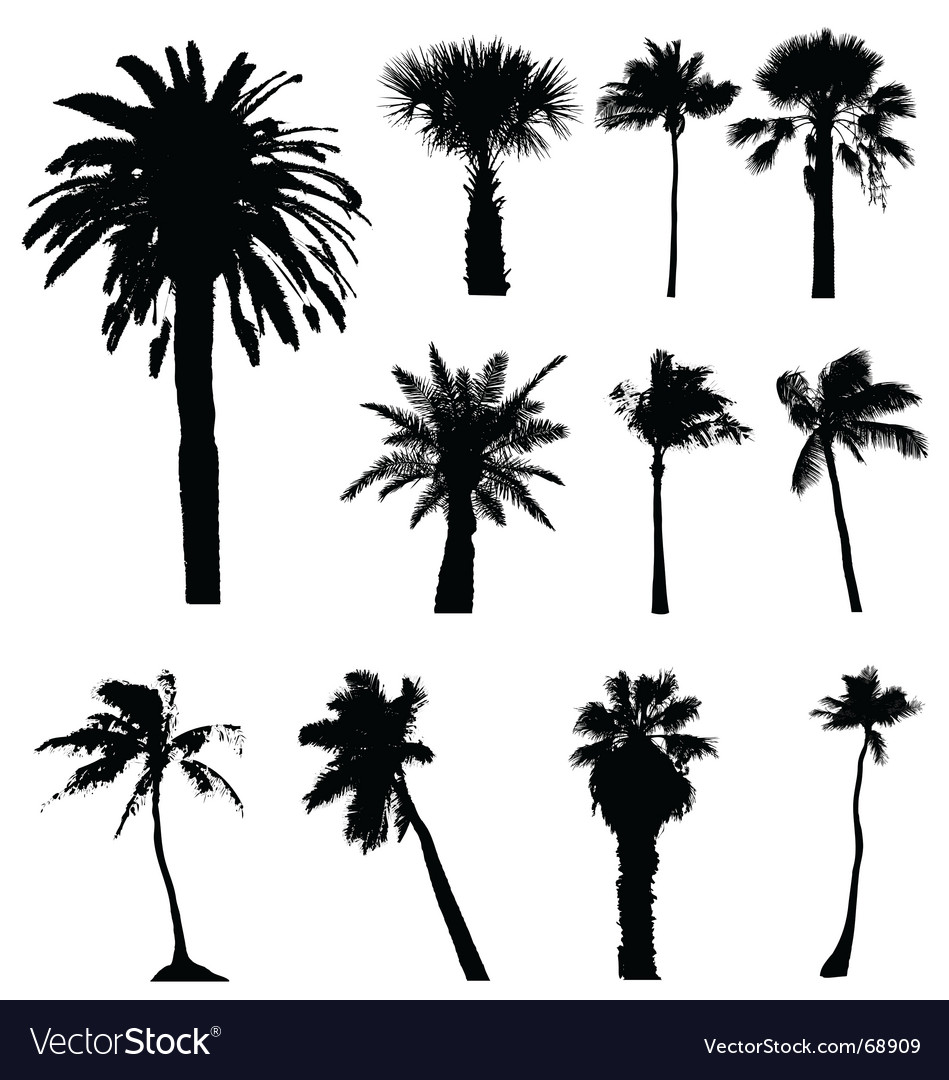 Collection of palm trees silhouettes vector | Price: 1 Credit (USD $1)