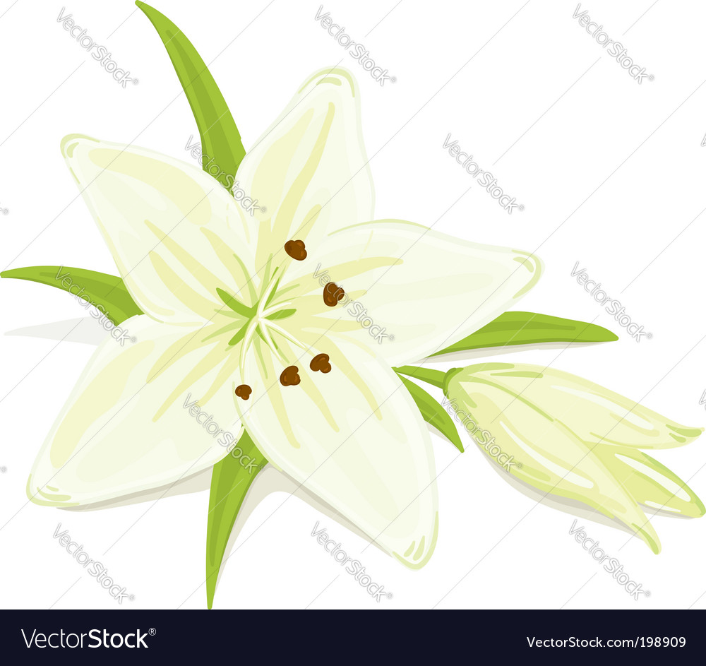 Delicate lily vector | Price: 1 Credit (USD $1)