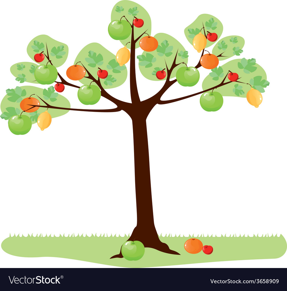 Tree with fruit vector | Price: 1 Credit (USD $1)