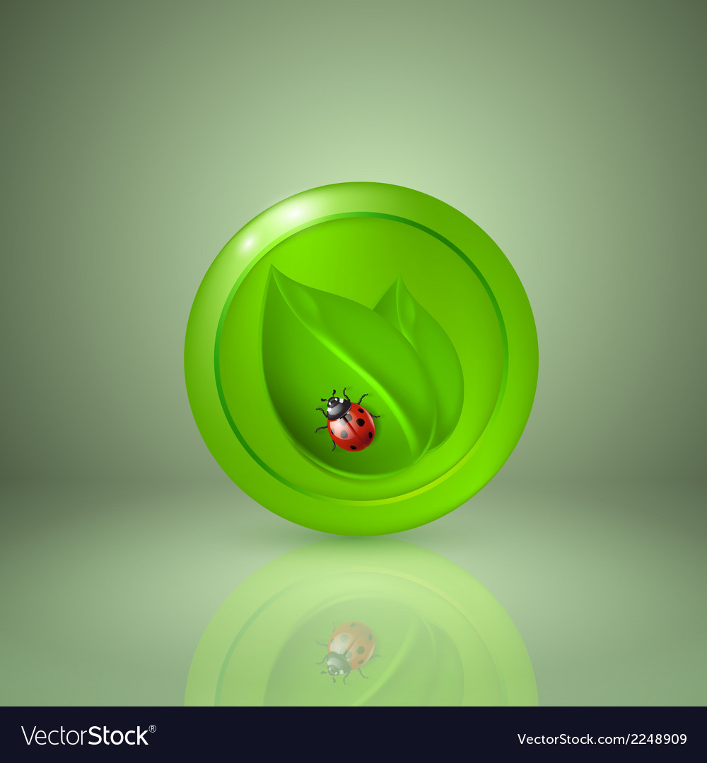 Two green leaves with ladybird vector | Price: 1 Credit (USD $1)