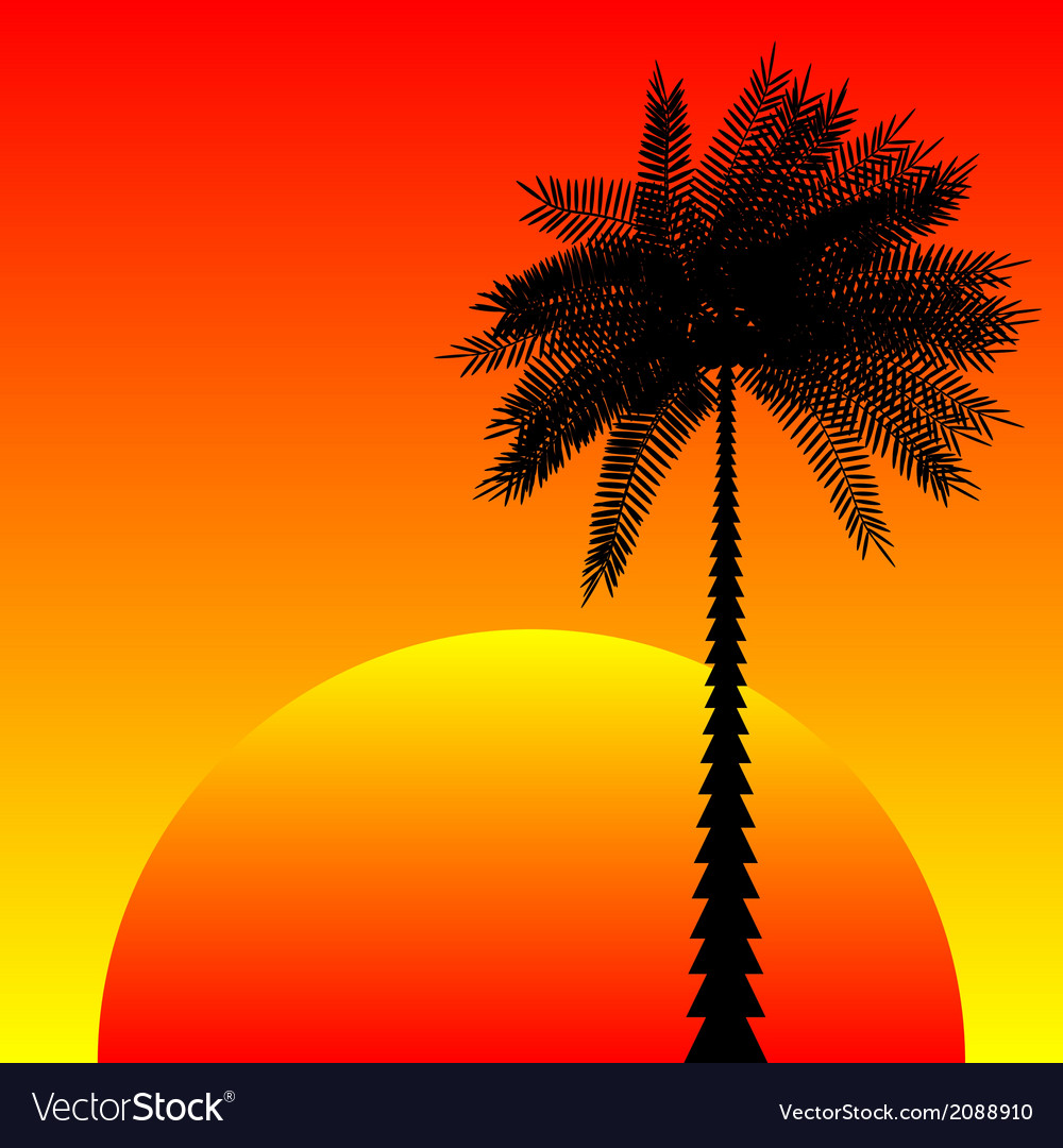 Tropic sunset vector | Price: 1 Credit (USD $1)