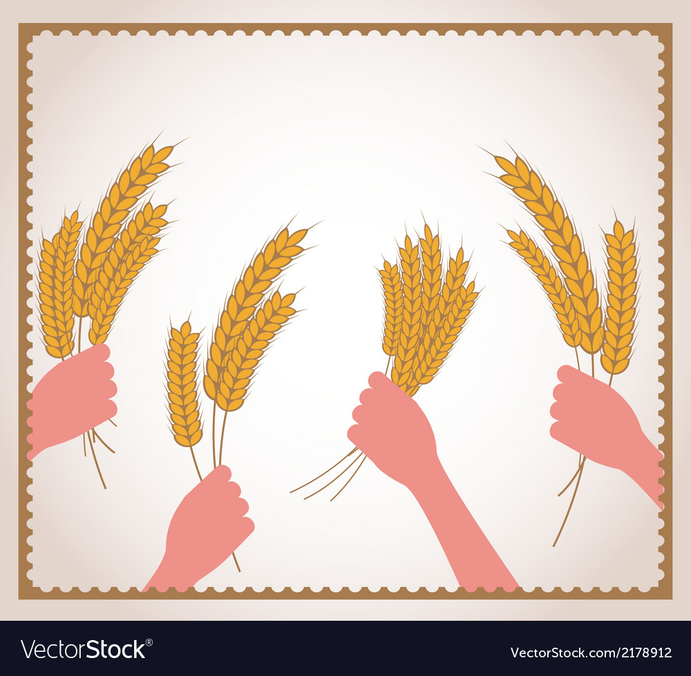 Hands holding fresh wheat vector | Price: 1 Credit (USD $1)