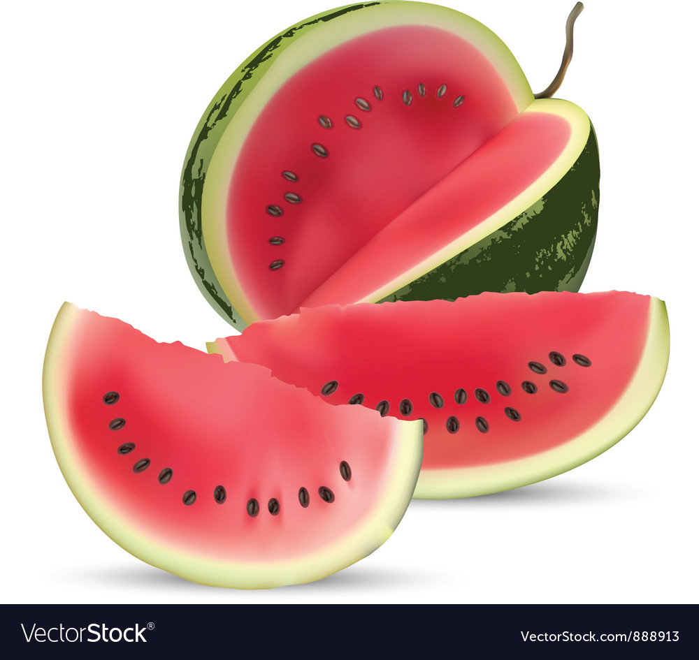 Watermelon vector | Price: 1 Credit (USD $1)
