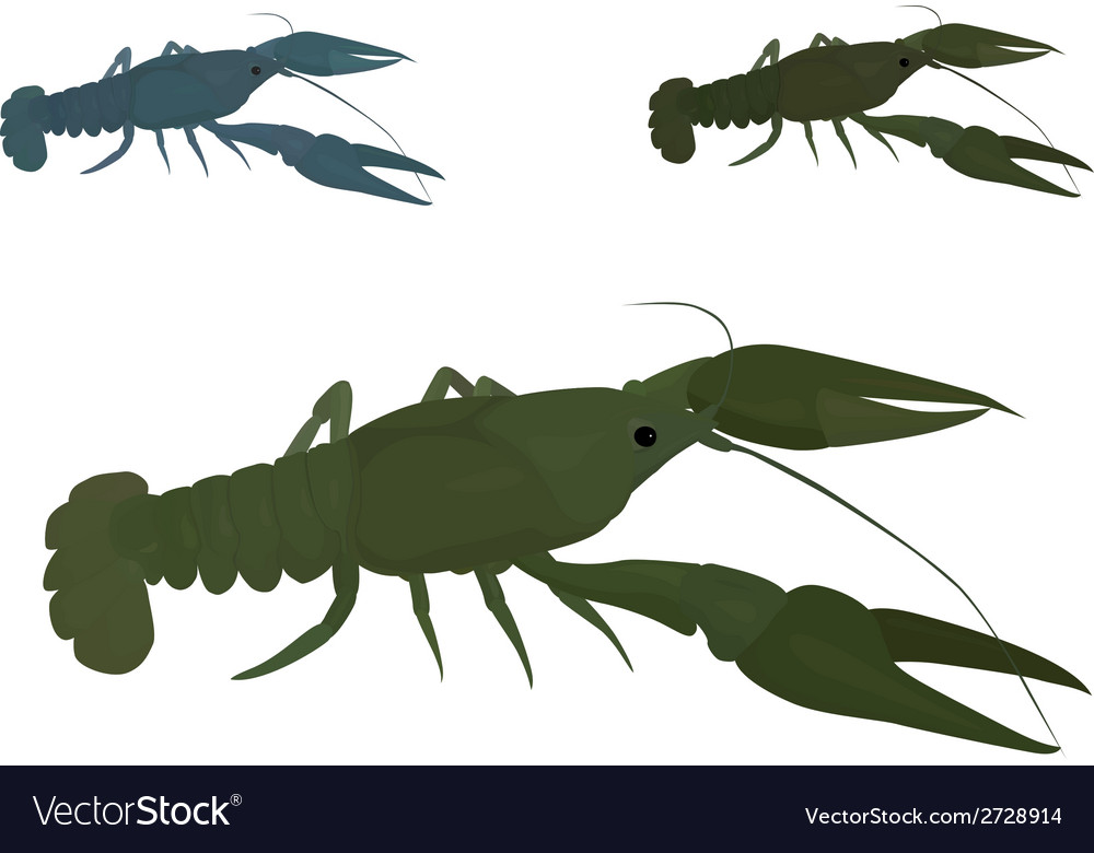 Green crayfish vector | Price: 1 Credit (USD $1)