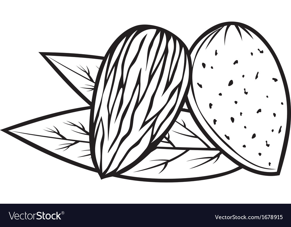 Almond with leaves - almond nut vector | Price: 1 Credit (USD $1)