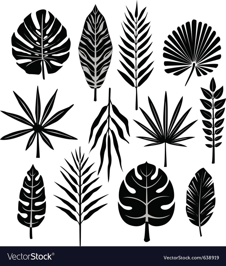 Tropical leaf vector | Price: 1 Credit (USD $1)