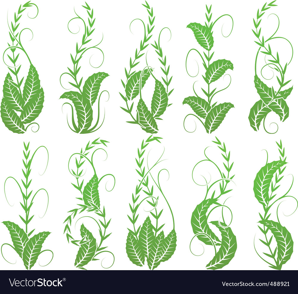 Vertical foliage vector | Price: 1 Credit (USD $1)