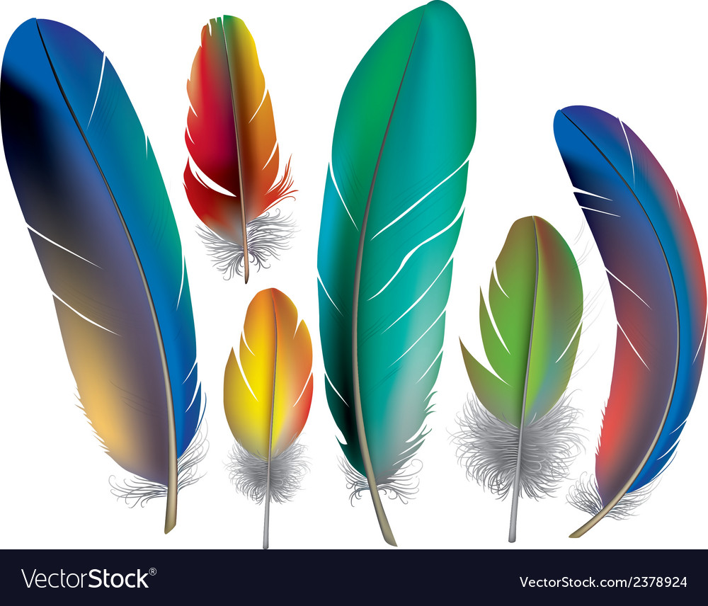 Colored feathers vector | Price: 1 Credit (USD $1)