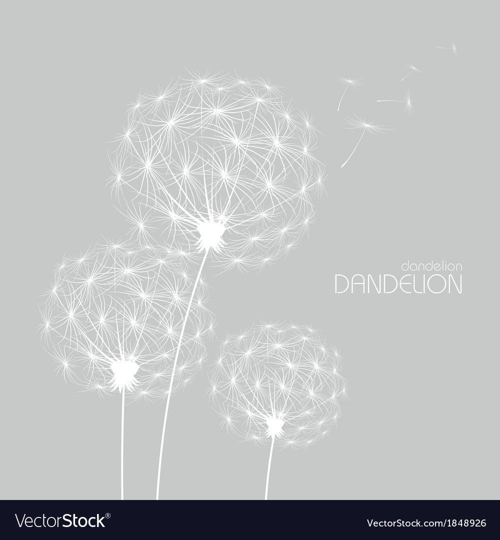 Abstract flower dandelion vector | Price: 1 Credit (USD $1)