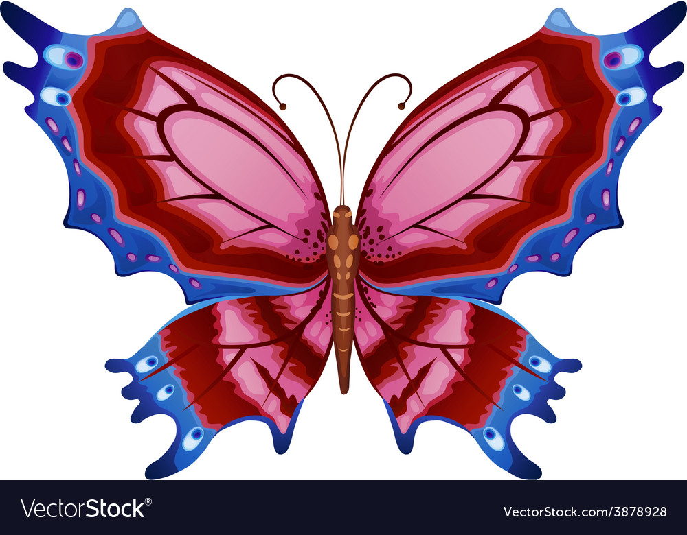 Colorful bright butterflies vector | Price: 1 Credit (USD $1)