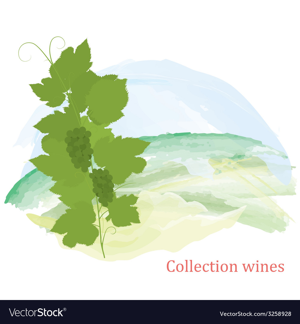 Grapevine and grapes clusters vector | Price: 1 Credit (USD $1)