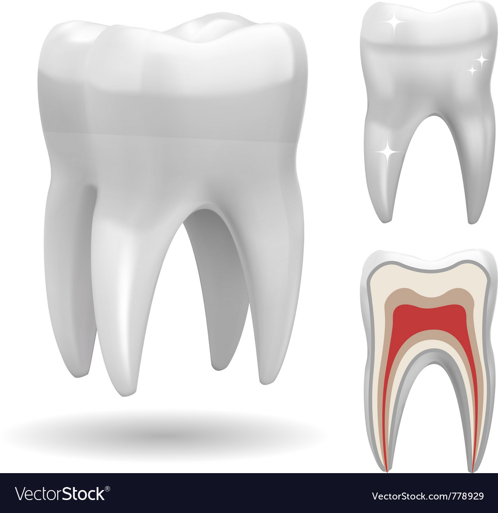 Excellent tooth vector | Price: 3 Credit (USD $3)