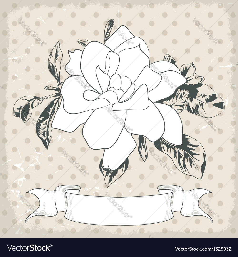 Hand drawn of a single flower eps 10 vector | Price: 1 Credit (USD $1)