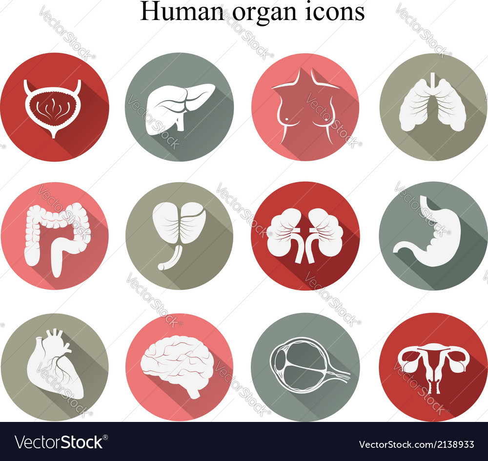 Set of human organs flat icons vector | Price: 1 Credit (USD $1)