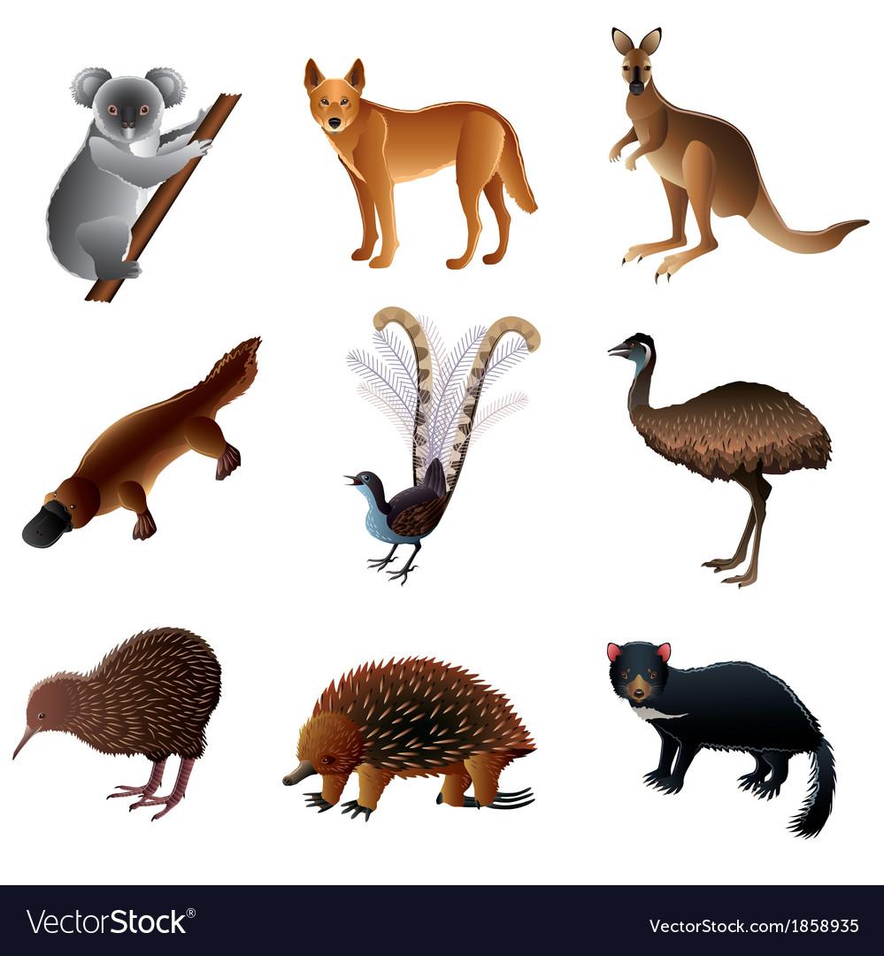 Australian animals vector   Price: 3 Credit (USD $3)