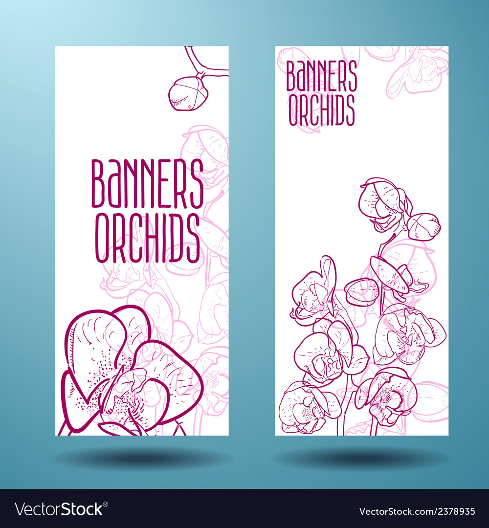 Orchids on the banner for design vector | Price: 1 Credit (USD $1)