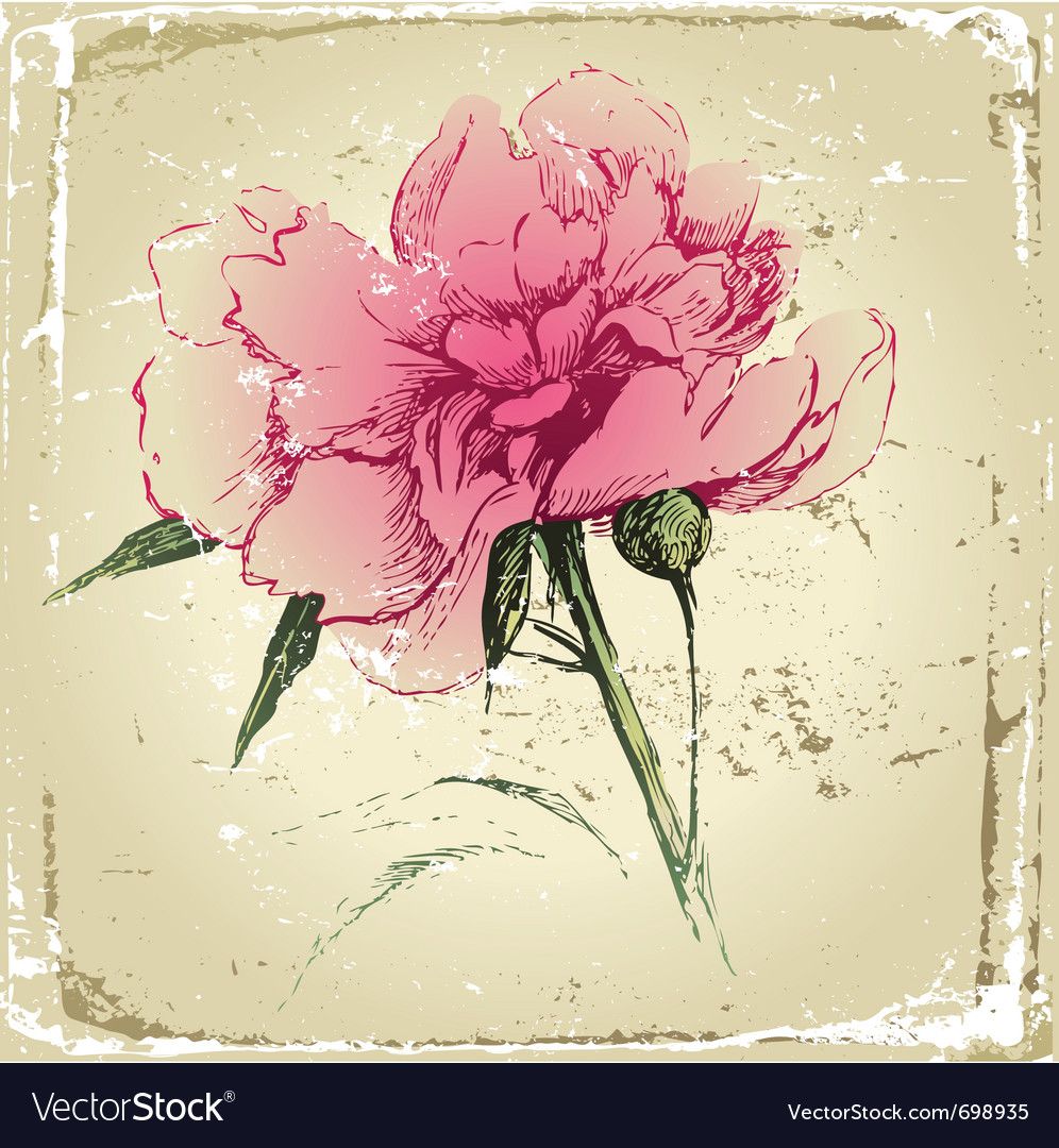 Retro-styled hand drawn peony flower vector | Price: 1 Credit (USD $1)