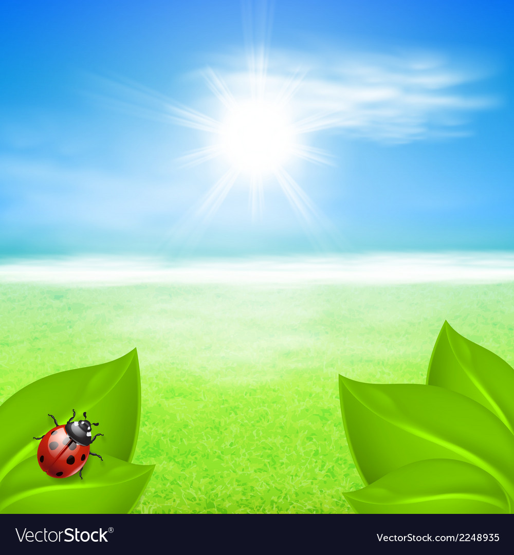 Sunny background with green grass and ladybird vector | Price: 1 Credit (USD $1)