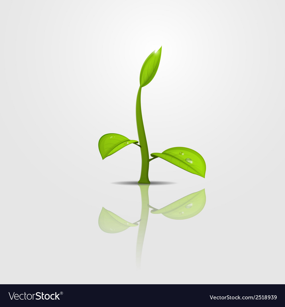 Sprout copy vector | Price: 1 Credit (USD $1)