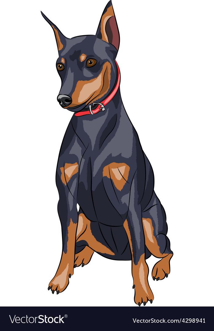 Miniature pinscher dog vector | Price: 1 Credit (USD $1)