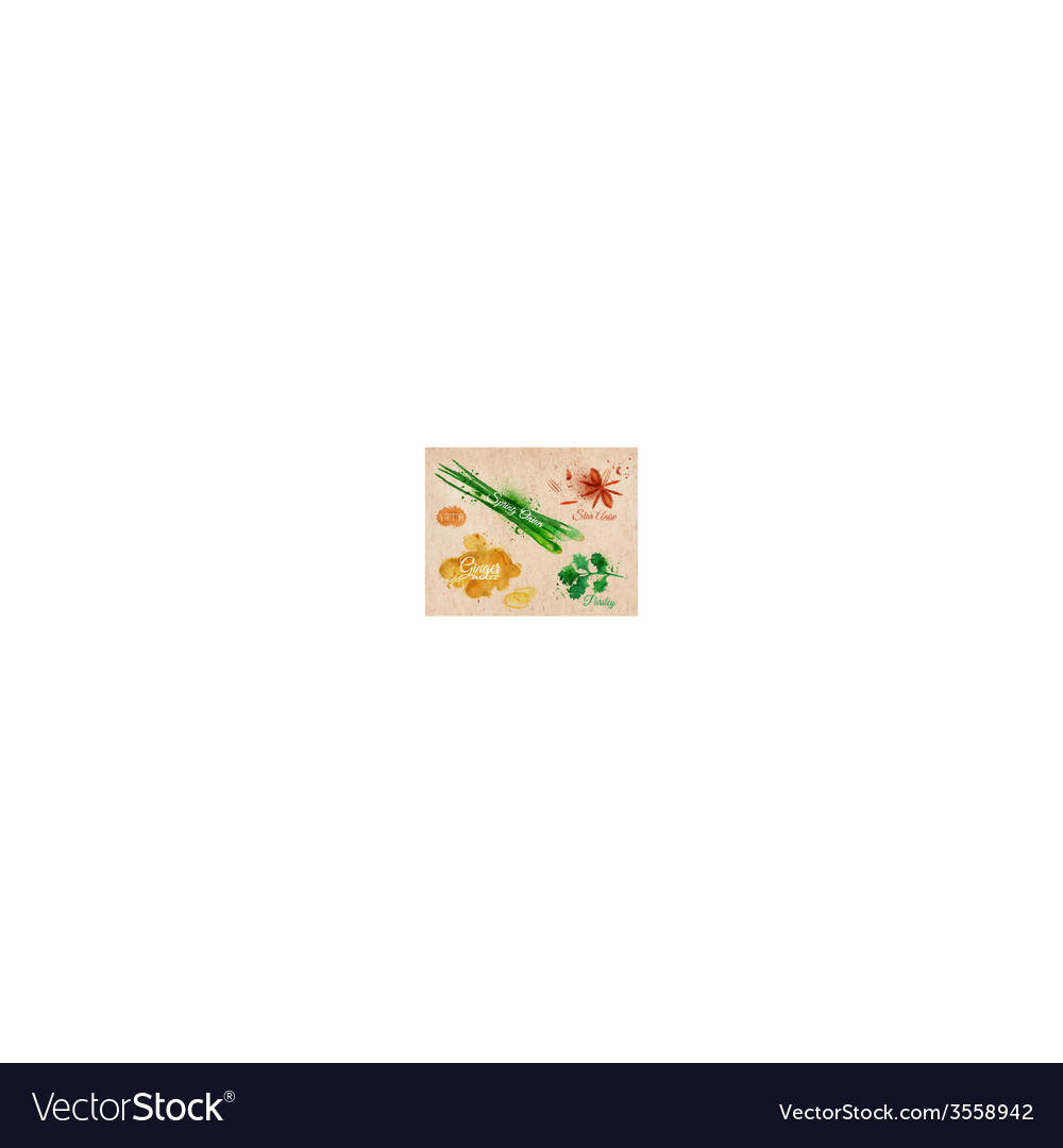 Spices herbs watercolor star anise parsley spring vector | Price: 1 Credit (USD $1)