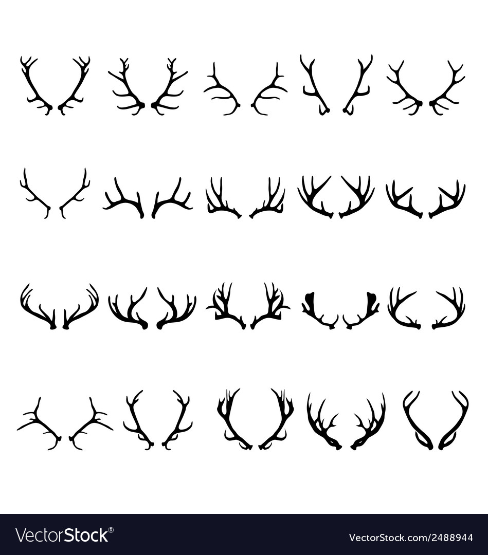 Antlers of deer 2 vector