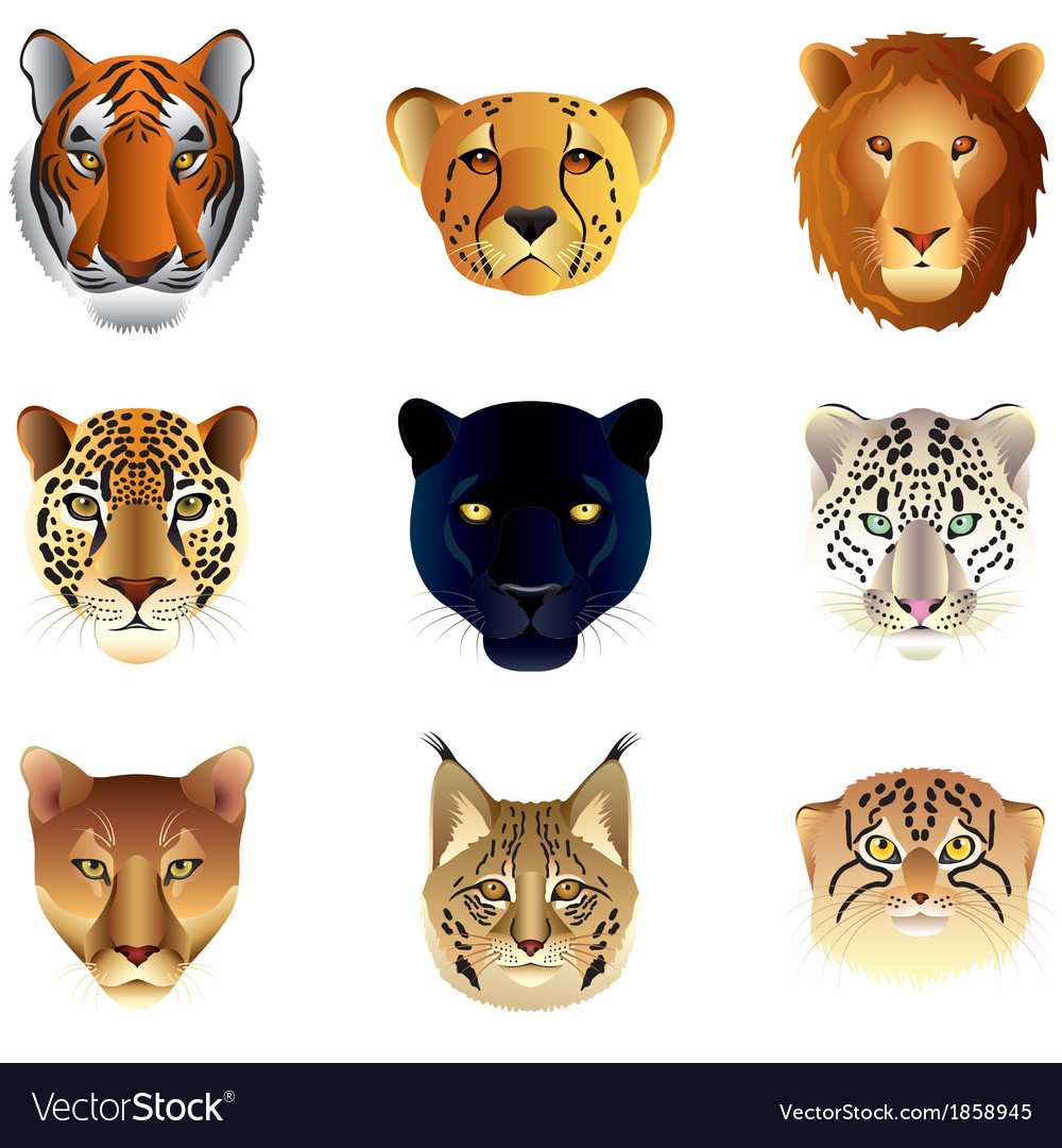 Big cats heads set vector | Price: 3 Credit (USD $3)