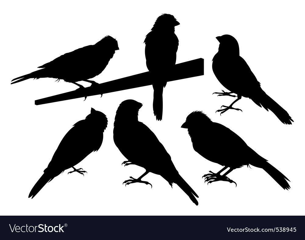 Canary bird silhouettes vector | Price: 1 Credit (USD $1)