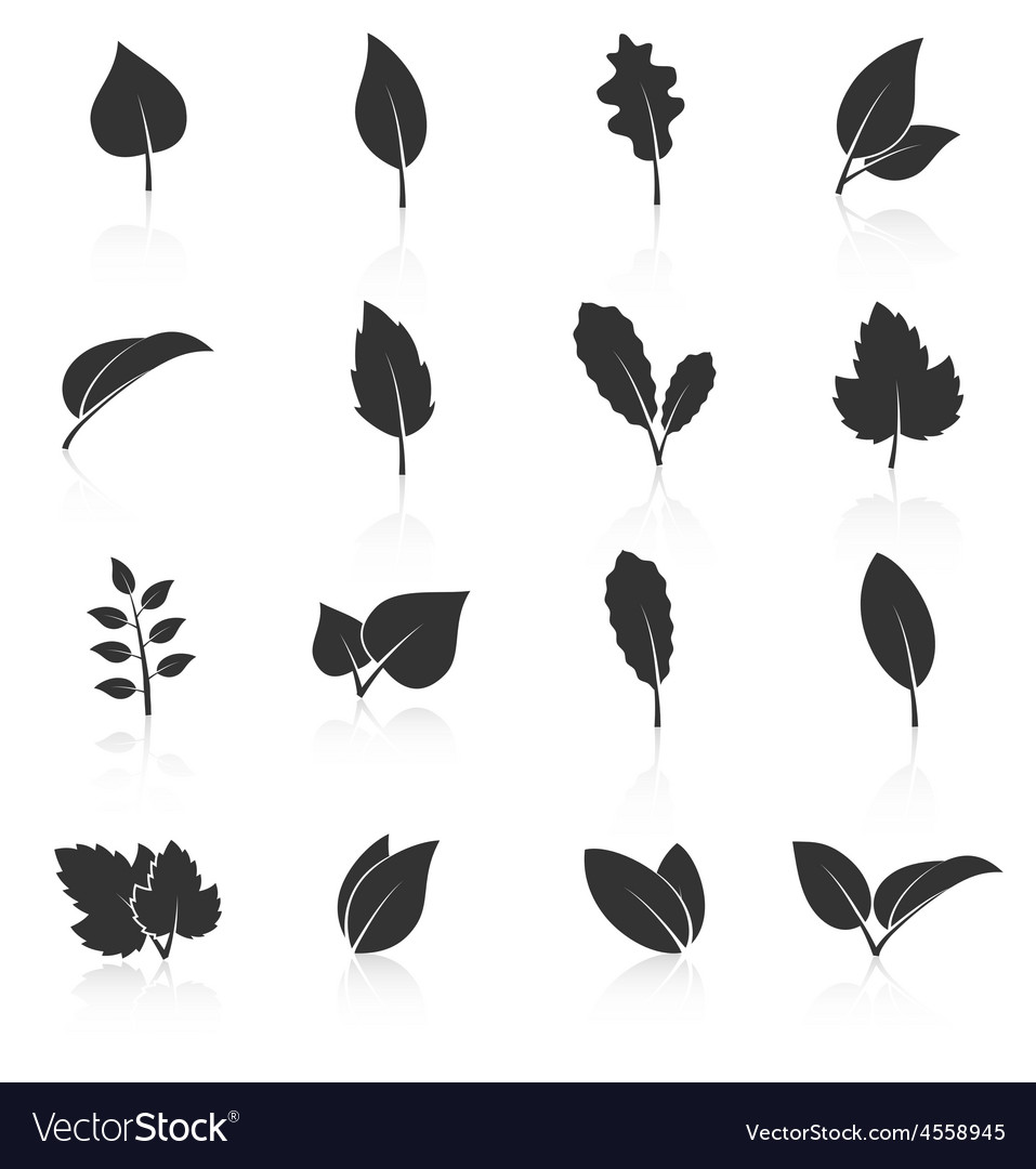 Set of leaf icons on white background vector