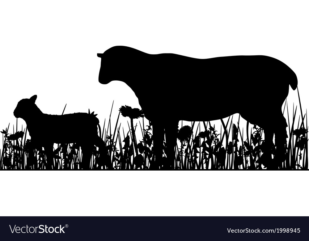 Sheep and lamb in the meadow vector | Price: 1 Credit (USD $1)