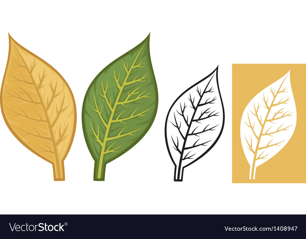 Tobacco leaves vector | Price: 1 Credit (USD $1)