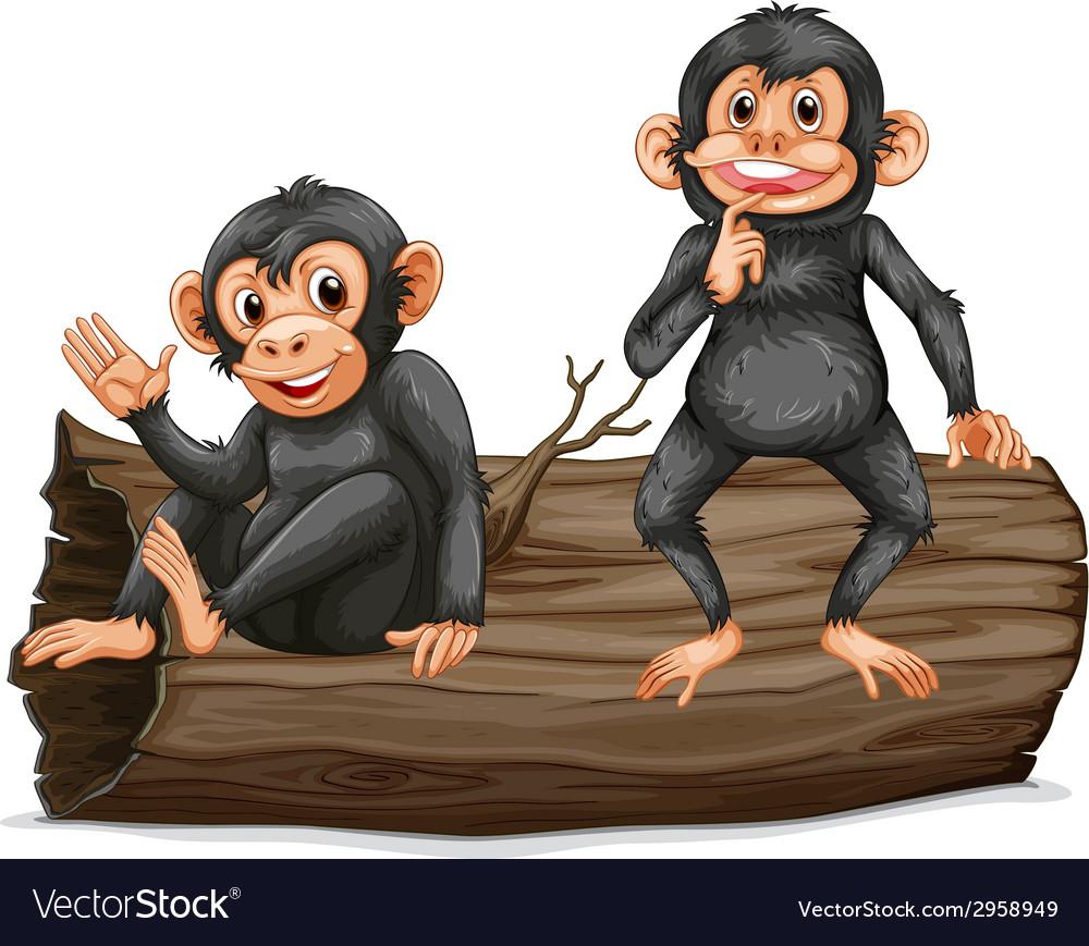 Chimpanzee vector   Price: 1 Credit (USD $1)