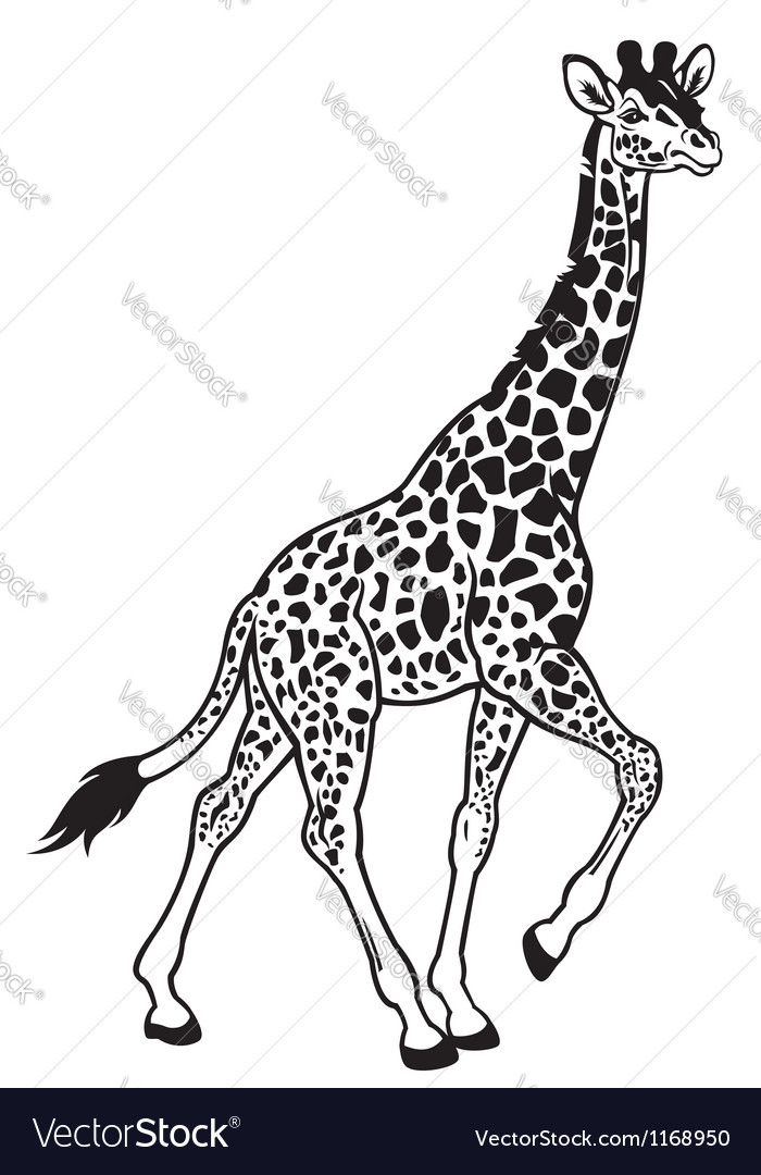 Giraffe black white vector | Price: 1 Credit (USD $1)