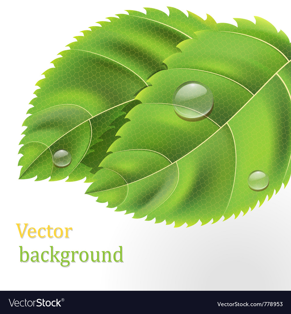 Bio green leaves vector | Price: 3 Credit (USD $3)
