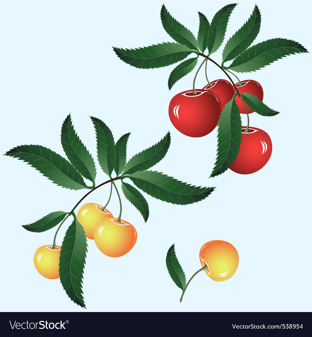 Cherry on branch vector | Price: 3 Credit (USD $3)