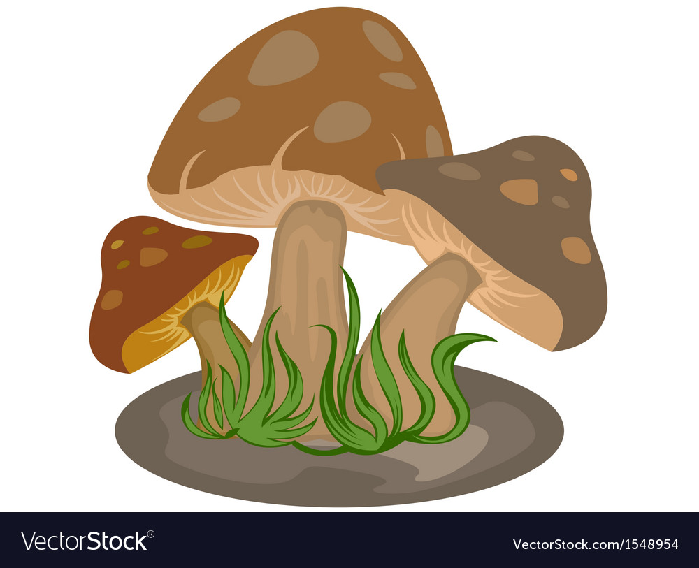 Mushrooms nature on a white background vector | Price: 3 Credit (USD $3)