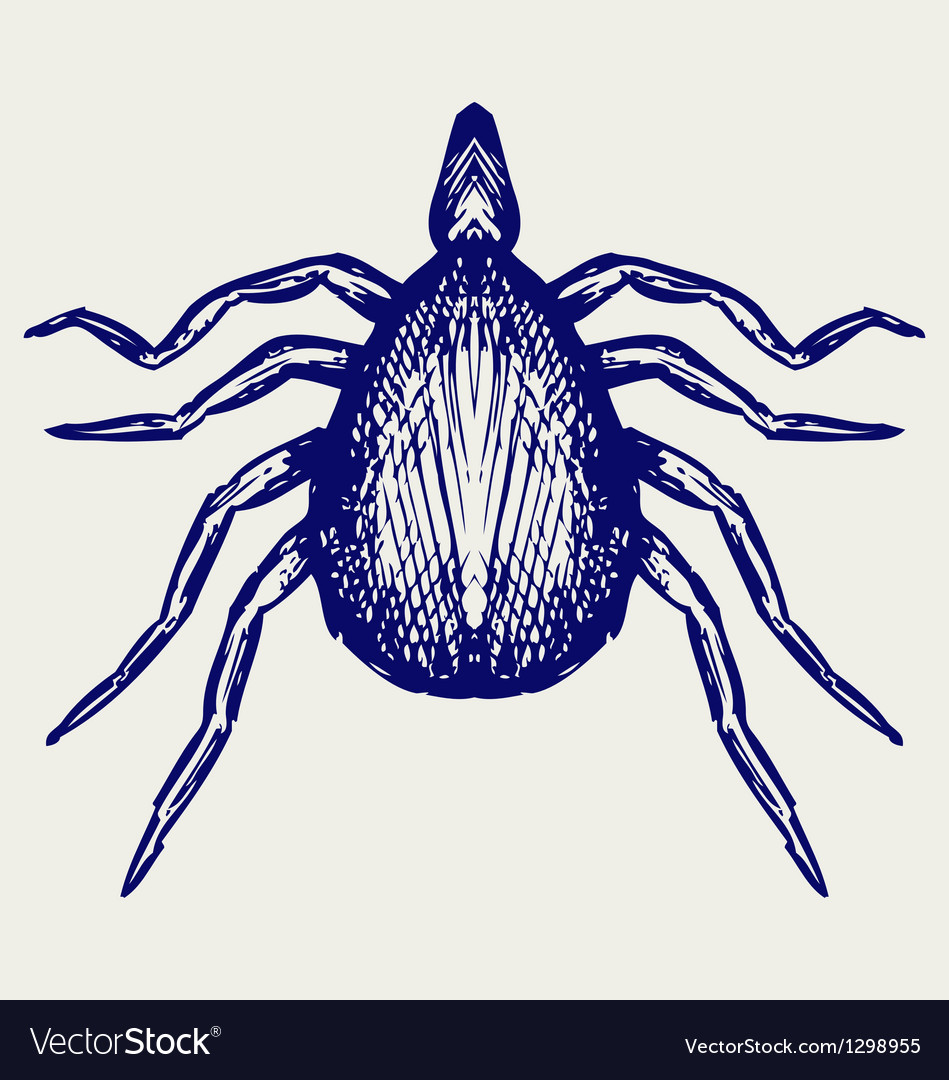 Mite bug vector | Price: 1 Credit (USD $1)