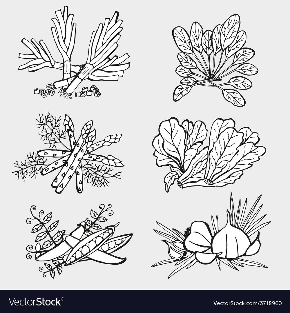 Vegetables set vector | Price: 1 Credit (USD $1)