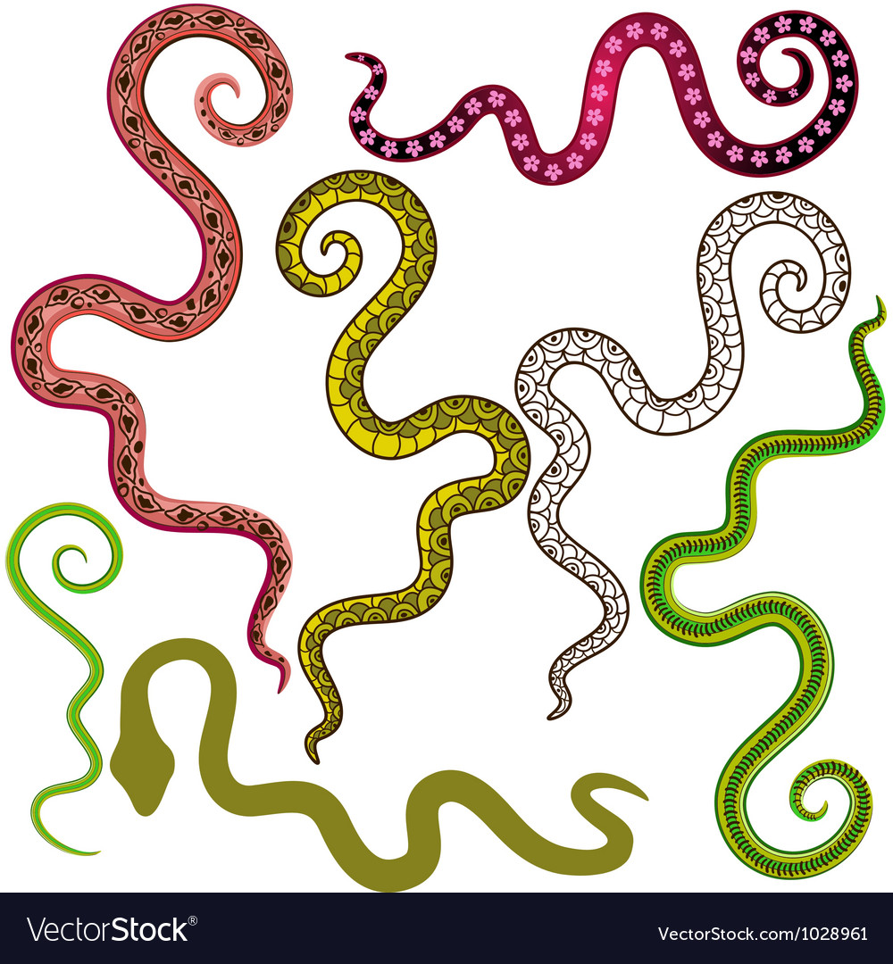 Set of colorful wavy lines vector | Price: 1 Credit (USD $1)