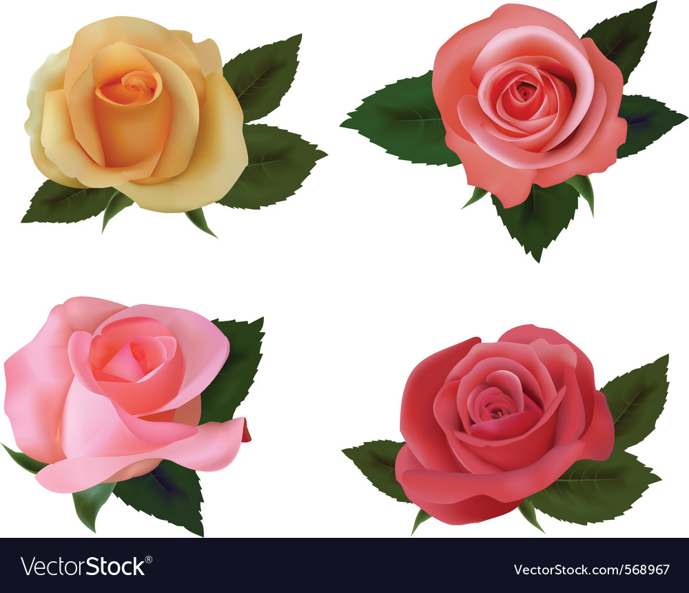 Group of a beauty roses vector | Price: 1 Credit (USD $1)