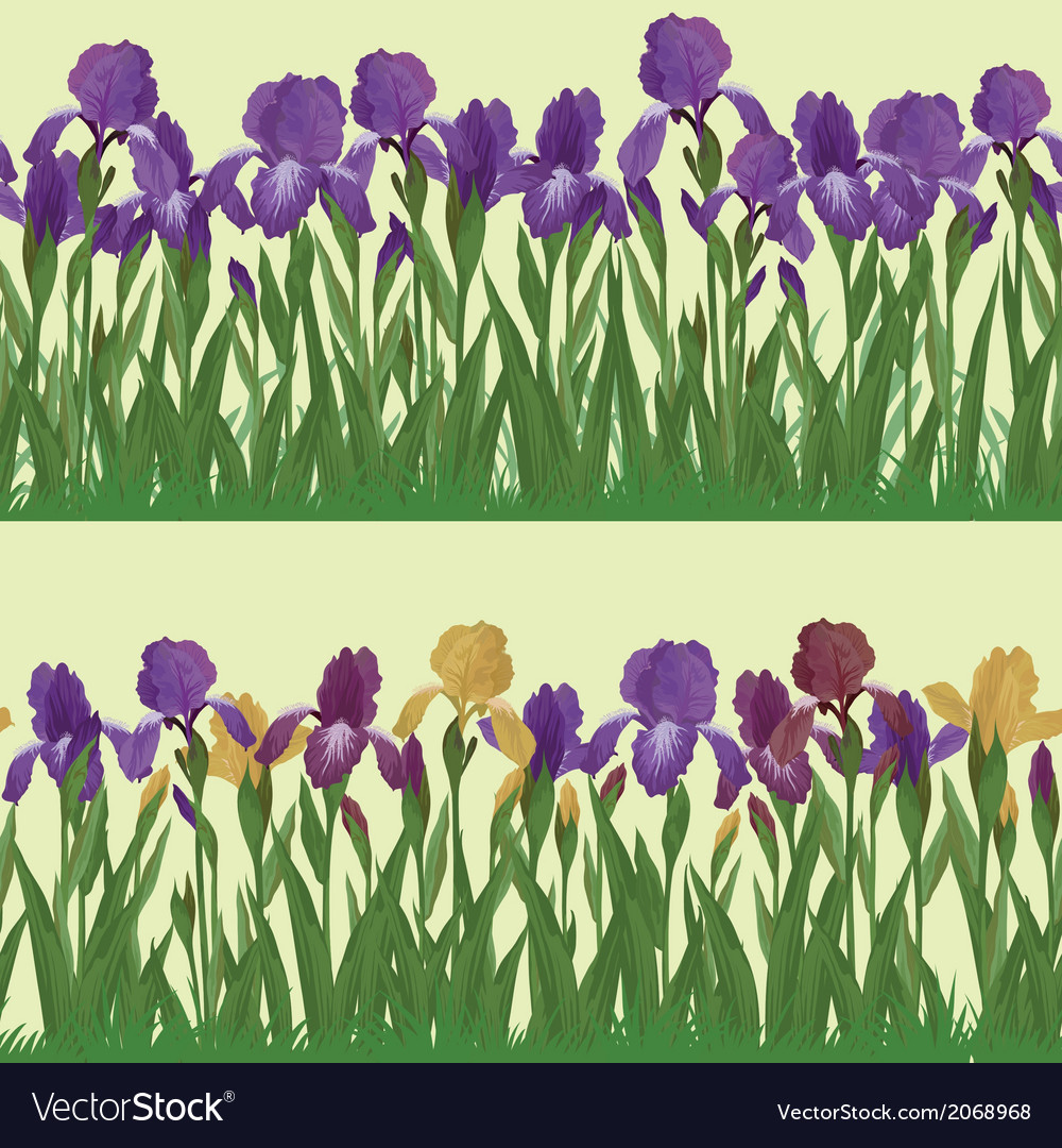 Flowers iris set seamless vector | Price: 1 Credit (USD $1)