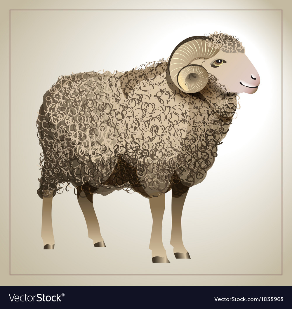 Realistic sheep vector | Price: 1 Credit (USD $1)