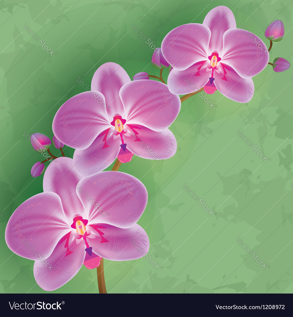 Floral vintage background green with flower orchid vector | Price: 1 Credit (USD $1)