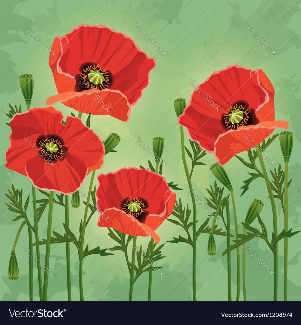 Floral vintage background with flowers poppies vector | Price: 1 Credit (USD $1)