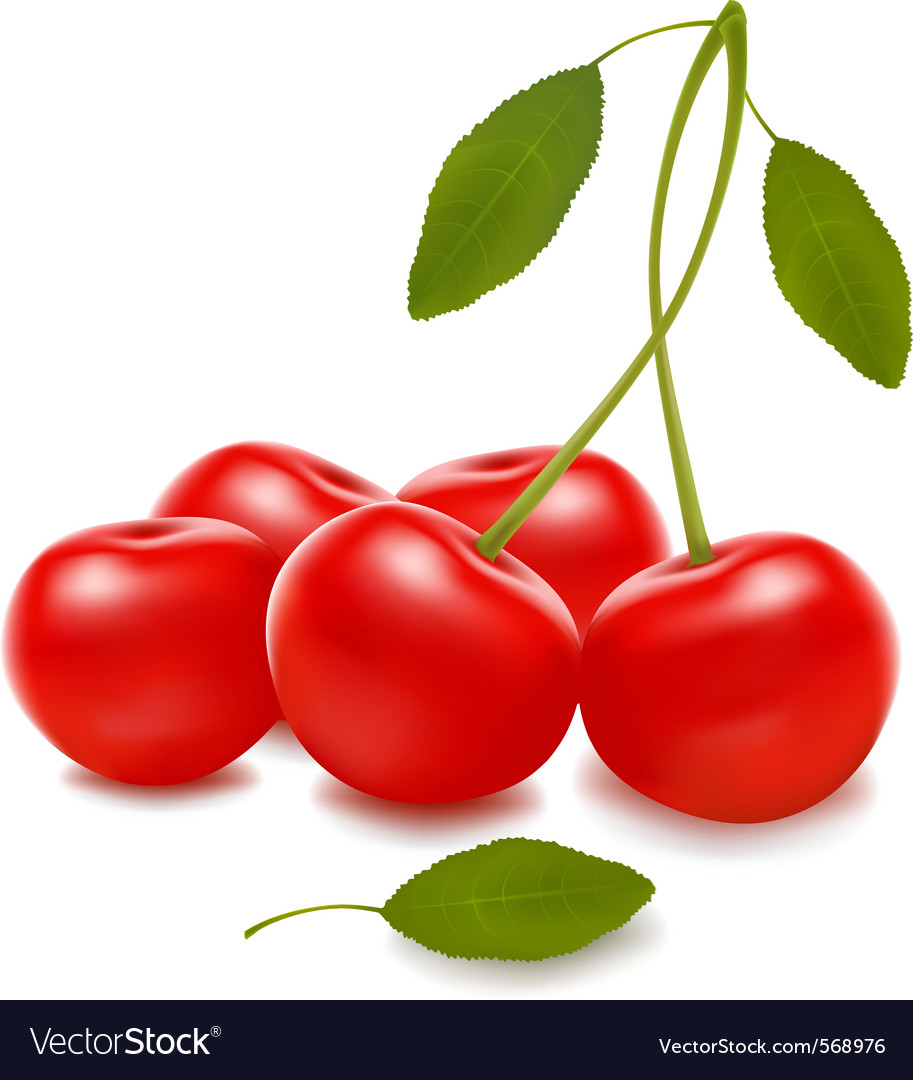 Group with red cherries vector | Price: 1 Credit (USD $1)