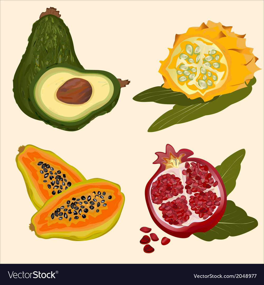 Background tropical fruit vector | Price: 1 Credit (USD $1)