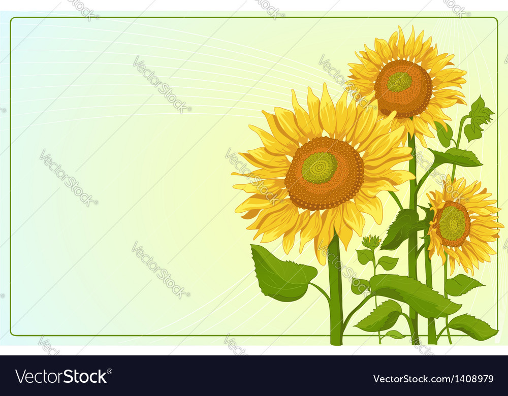 Background with sunflowers vector | Price: 1 Credit (USD $1)