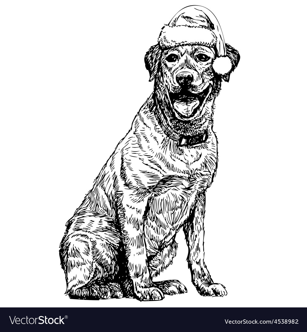 Labrador retriever vector | Price: 3 Credit (USD $3)