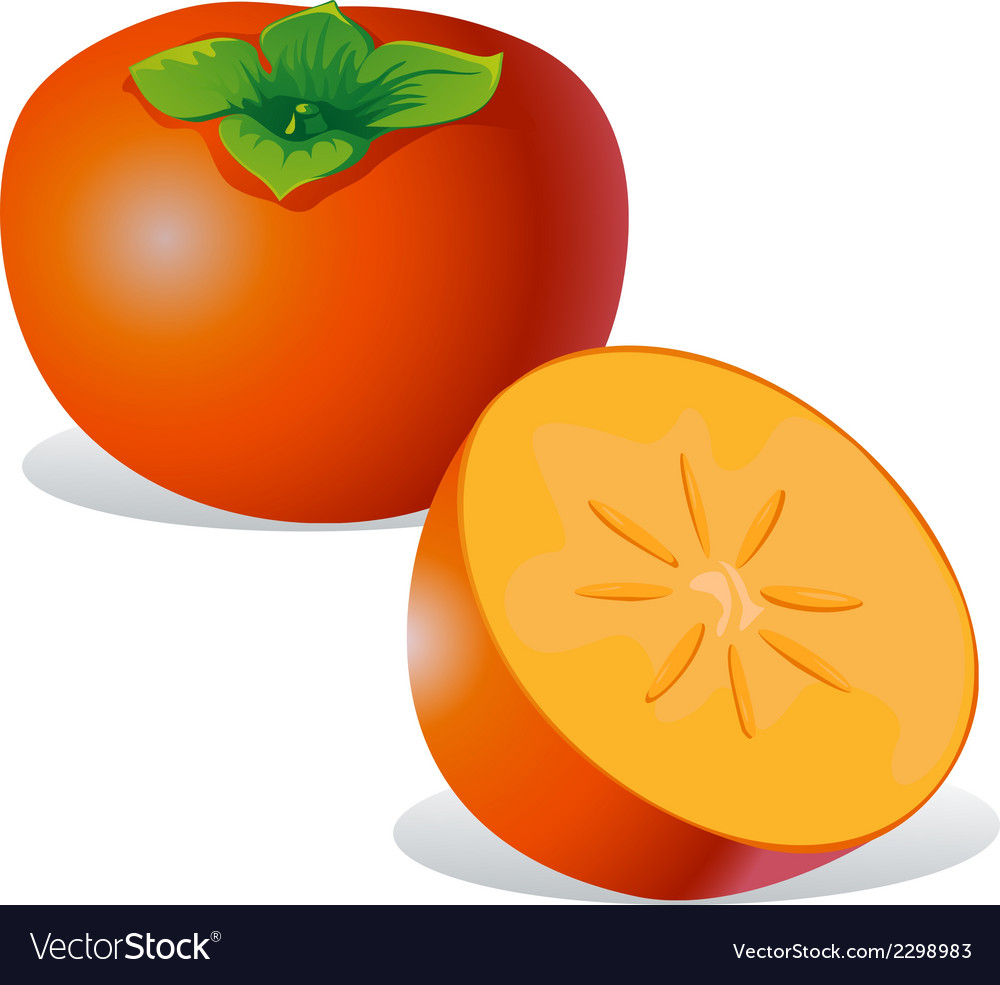 Persimmon - vector | Price: 1 Credit (USD $1)